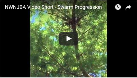 2016-0420_Swarm captured in location
