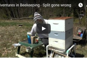 Hive Inspection Gone Wrong