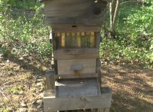 warre style beehive